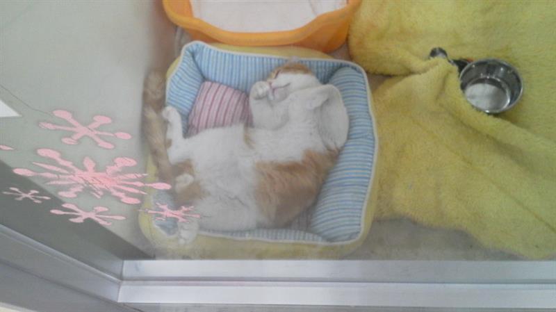 ホームセンターの猫