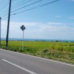 海と田んぼ
